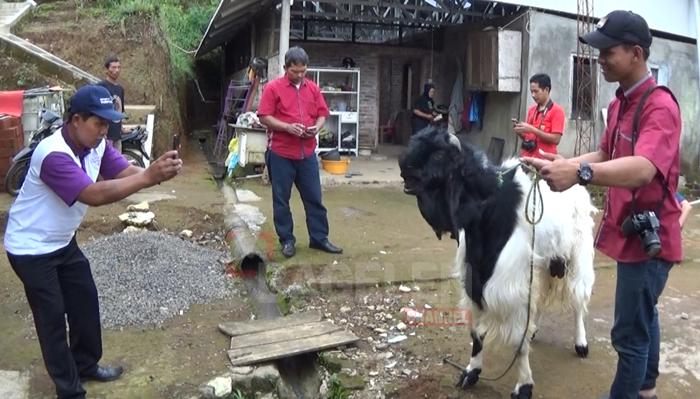 Rekreasi Sambil Belajar Budidaya Kambing Etawa